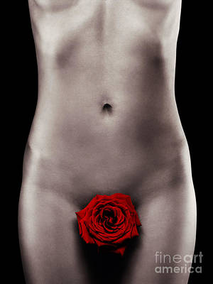 Nude Woman Body With A Red Rose Poster by Oleksiy Maksymenko