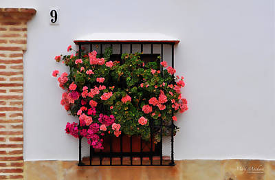Number 9 - Geraniums In The Window Poster by Mary Machare