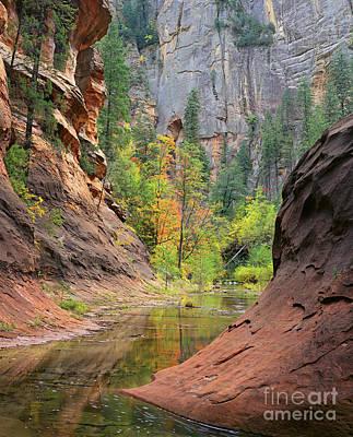 Oak Creek Canyon Poster by Timm Chapman