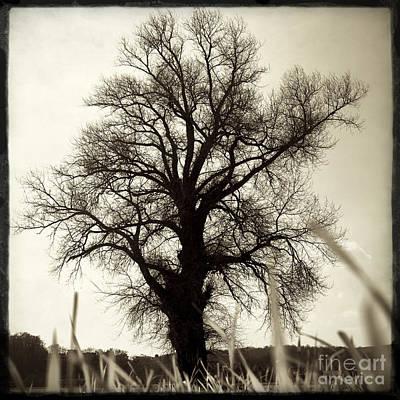 Oak .quercus Sp Poster by Bernard Jaubert