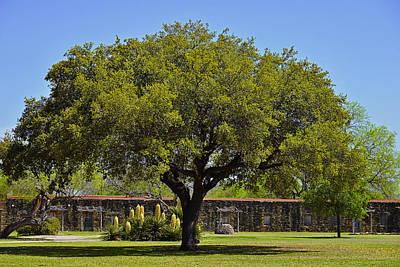 Oak Tree Mission San Jose Tx Poster by Christine Till