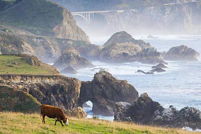 Oceanfront Cow In Big Sur Poster by Priya Ghose