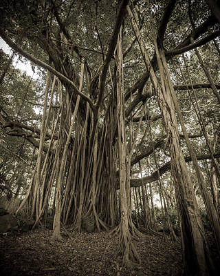 Roots Poster featuring the photograph Old Banyan Tree by Adam Romanowicz