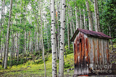Old Outhouse Among Aspens Poster by Lincoln Rogers