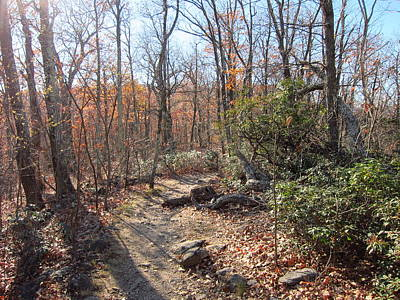 Old Rag Hiking Trail - 121247 Poster by DC Photographer