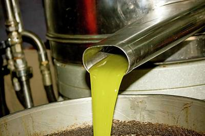 Olive Oil Press Poster by Photostock-israel