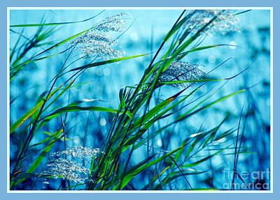 On A Blue Afternoon Poster by Susanne Van Hulst