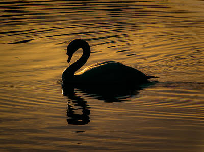On Golden Pond Poster by Chris Fletcher