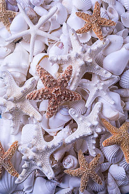 Orange And White Starfish Poster by Garry Gay