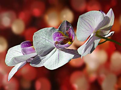 Orchid Flower Photographic Art Poster by David Dehner