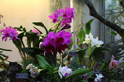 Orchids - Us Botanic Garden - 011353 Poster by DC Photographer