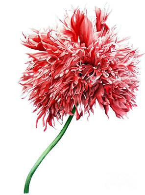 Oriental Poppy II Poster by Marie Burke
