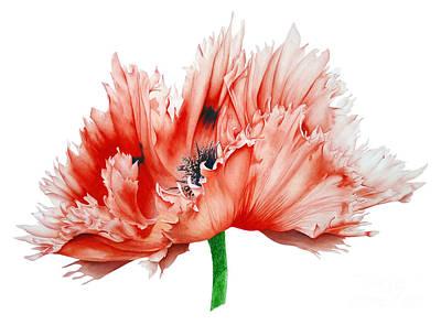Oriental Poppy Poster by Marie Burke