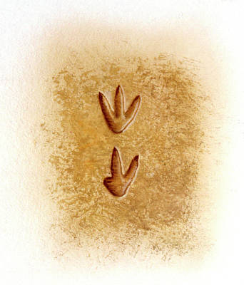 Ornitholetes Dinosaur Footprints Poster by Deagostini/uig