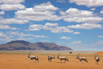 Oryx Crossing Desert Namibrand Nature Poster by Theo Allofs