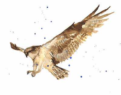 Osprey Painting Poster by Alison Fennell