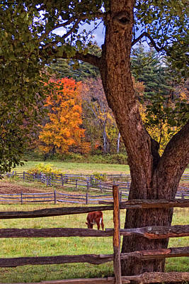 Out To Pasture Poster by Joann Vitali