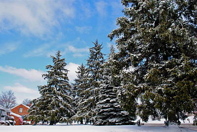 Painted Pines Poster by Frozen in Time Fine Art Photography