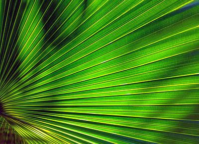 Palm Art 853 Poster by Steve Lipson