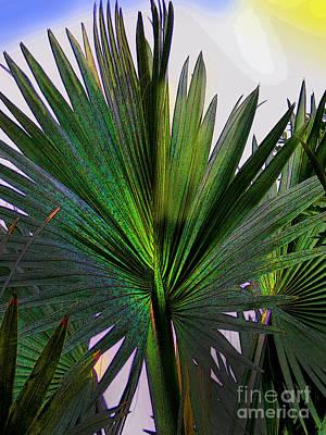 Palm Fan In David - Panama Poster by Al Bourassa