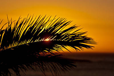 Palm Leaf In Sunset Poster by Yngve Alexandersson