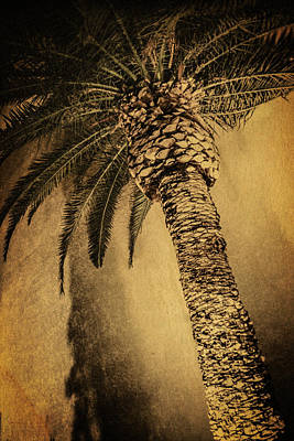Palm Tree At The Aladdin Casino Poster by YoPedro