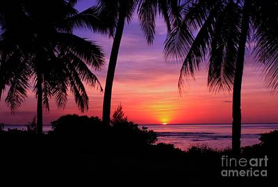 Palm Tree Sunset In Paradise Poster by Scott Cameron