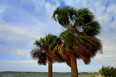 Palm Trees In The Wind Poster by Debra Forand