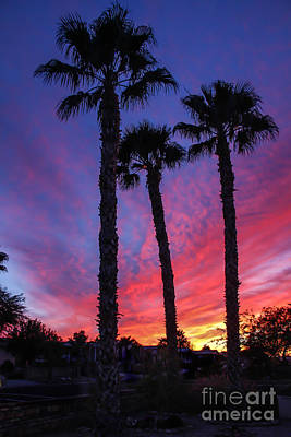 Palm Trees Sunset Poster by Robert Bales