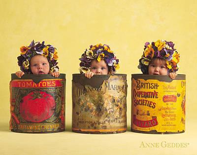 Pansies Poster by Anne Geddes
