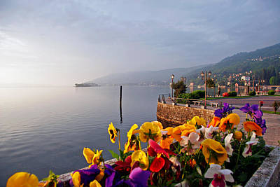 Pansies On Lake Maggiore Poster by Peter Tellone