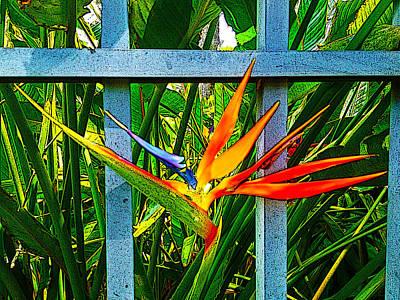 Paradise Art 6196 Poster by Steve Lipson