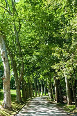 Park And Garden Of Villa Demidoff Poster by Nico Tondini