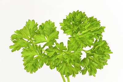 Parsley Sprigs Poster by Ann Pickford