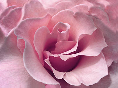 Passion Pink Rose Flower Poster by Jennie Marie Schell