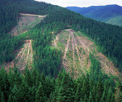 Patches Of Clearcut Mountain Poster by Panoramic Images