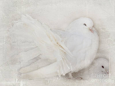 Peaceful Existence White On White Poster by Barbara McMahon