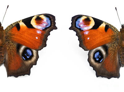 Peacock Butterfly Wings Poster by Tim Gainey