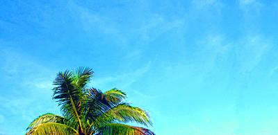 Peekaboo Palm - Tropical Art By Sharon Cummings Poster by Sharon Cummings