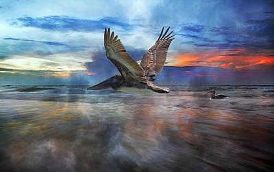 Pelican Sunrise Poster by Betsy C Knapp