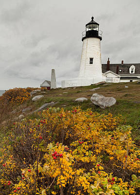 Pemaquid Point Lighthouse And Sea Roses Poster by David Smith
