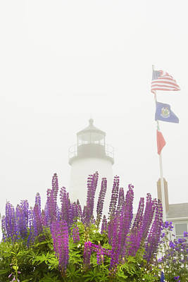 Pemaquid Point Lighthouse Lupine Maine Prints Poster by Keith Webber Jr