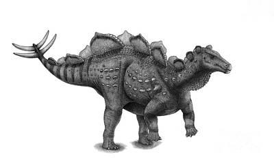 Pencil Drawing Of Wuerhosaurus Homheni Poster by Vladimir Nikolov