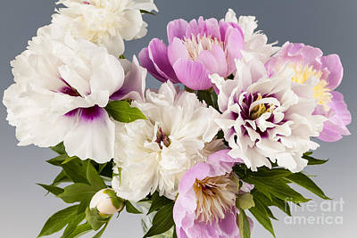 Peony Flower Bouquet Poster by Elena Elisseeva