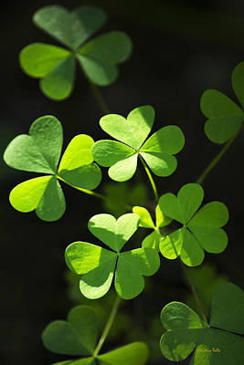 Perfect Green Shamrock Clovers Poster by Christina Rollo