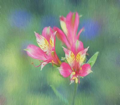 Peruvian Lily Poster by Kim Hojnacki