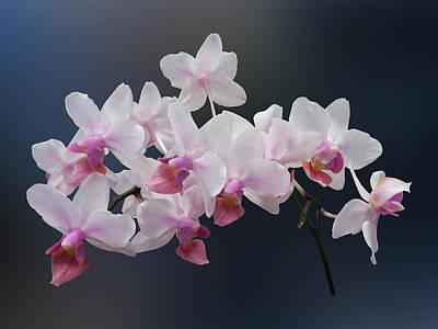 Phalaenopsis Orchids Twilight Rainbow Poster by Susan Savad