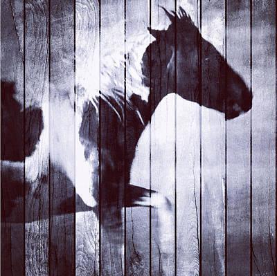 Phantom Stallion Poster by Patricia Januszkiewicz