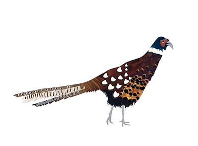 Pheasant Poster by Isobel Barber