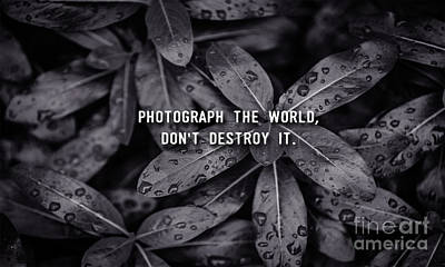 Photograph The World Don't Destroy It Poster by Liesl Marelli